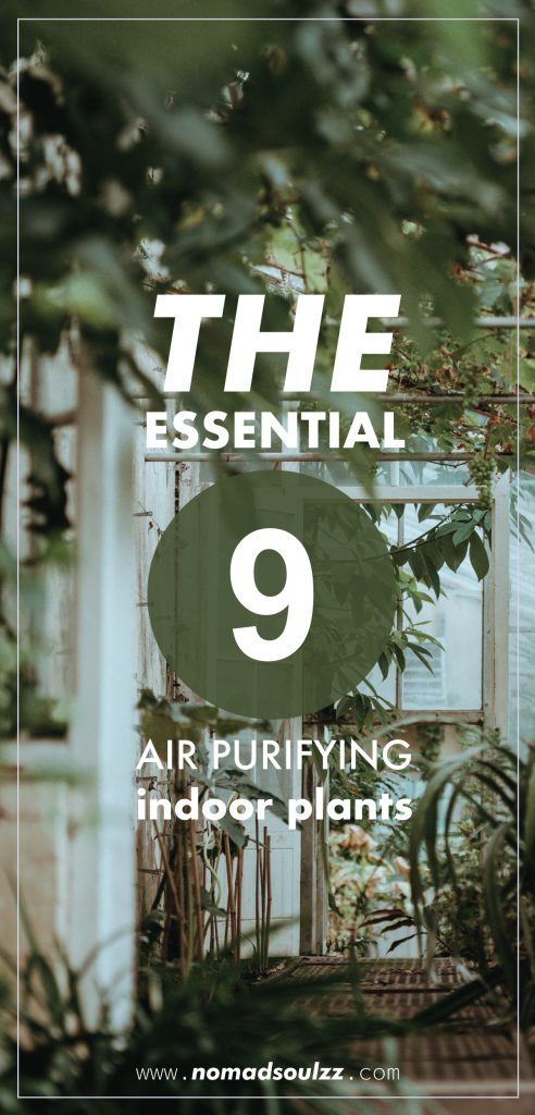 Boost The Air Quality In Your Home With These 9 Radiant Plants. We cover which toxins you are exposed to, why you should be purifying them and more practical: which plants can do this for you! It's based on results from the NASA Clean Air Study. If these plants can survive in space, we all can manage! Indoor air quality, here I come!